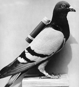 carrier_pigeon
