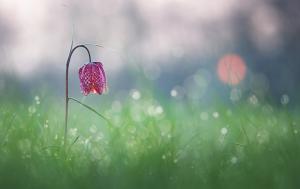 flowercc